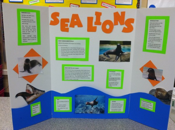 Endangeredspeciesprojects