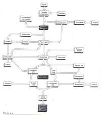 Cellular Respiration Diagram Worksheet   www.pixshark.com ...