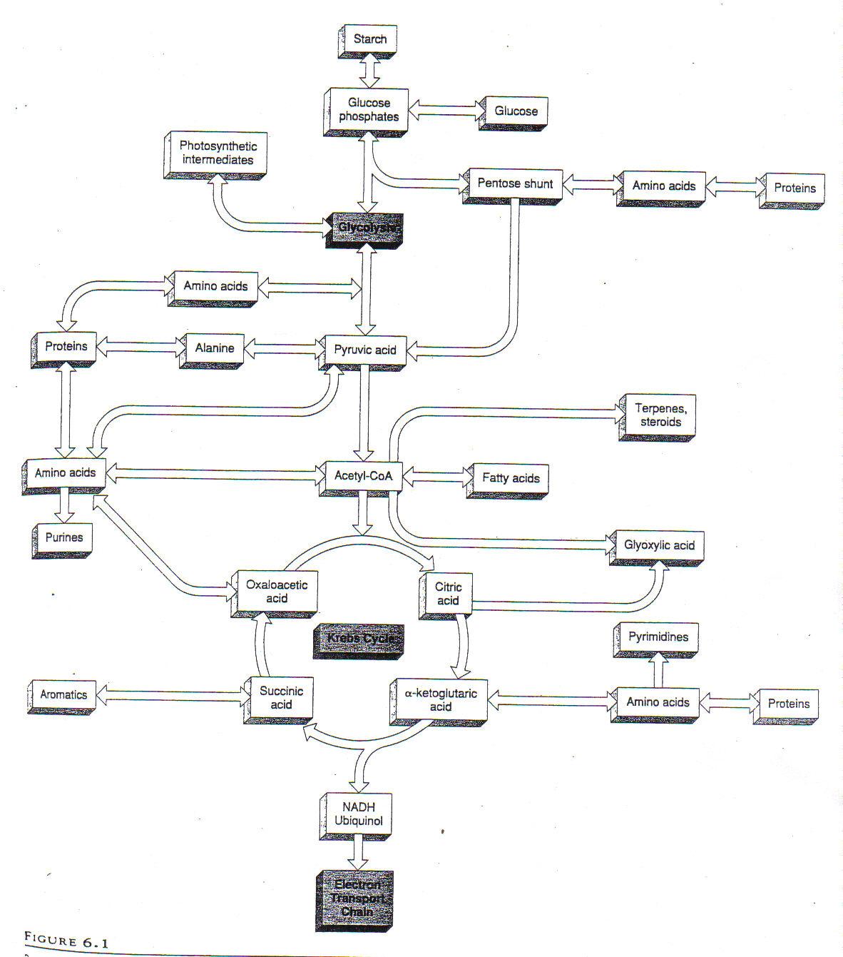 cellular respiration diagram worksheet sony xplod cdx gt210 wiring