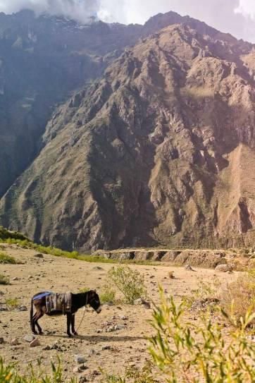 Ultimate Guide on How to Hike to Machu Picchu // localadventurer.com