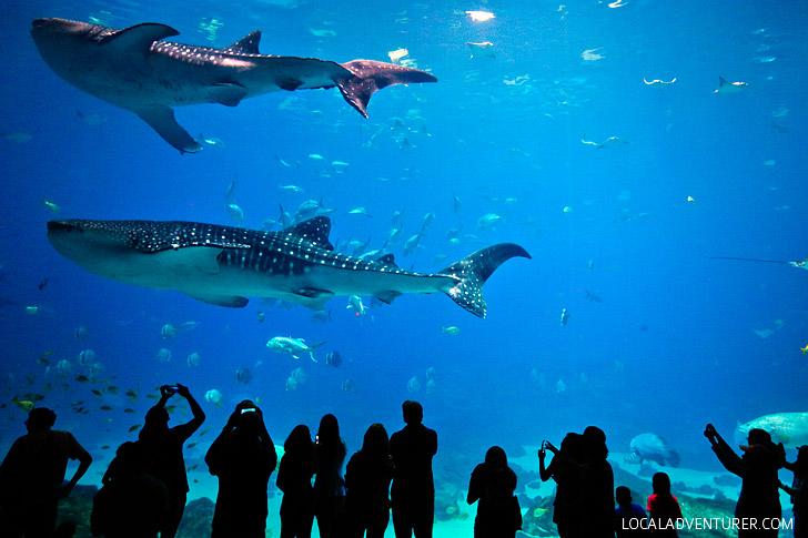The Second Largest Aquarium in the World // localadventurer.com