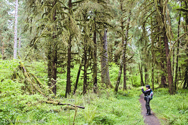 4 Things to Do in Olympic National Park Washington: Hoh Rainforest Trail.