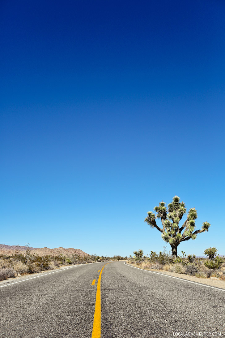 Driving Joshua Tree NP in California // localadventurer.com