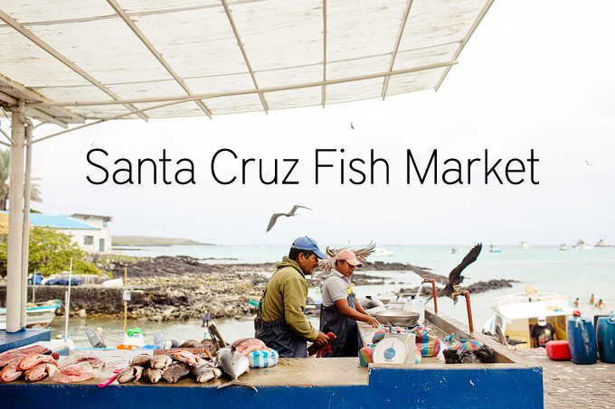 santa cruz fish market puerto ayora gal pagos islands