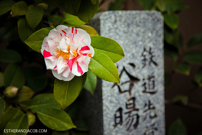 Photo of Kyoto Japan during cherry blossom season.