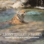 Feeding Lions Tigers and Bears Alpine Animal Rescue