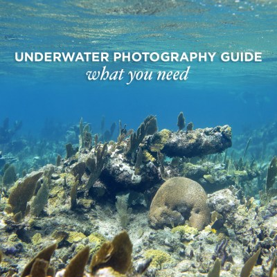 Photo Gear Guide to Underwater Photography