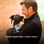 Puppy Adoptions + Scott Foley + Swiffer in NYC