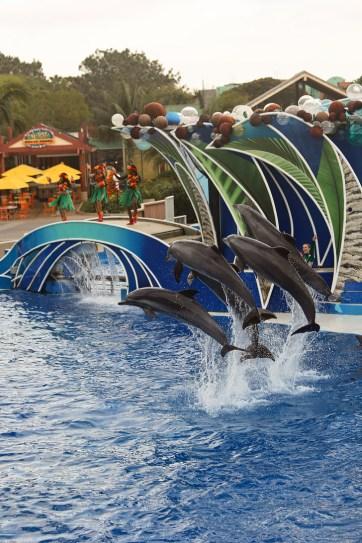 San Diego SeaWorld Dolphin Show.