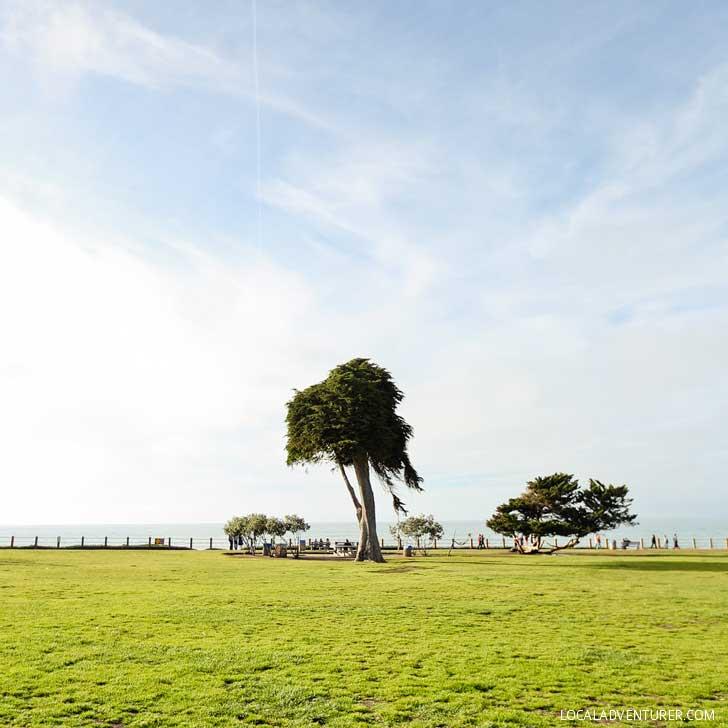 Truffula Tree in La Jolla (13 Best Instagram Spots in San Diego) // localadventurer.com