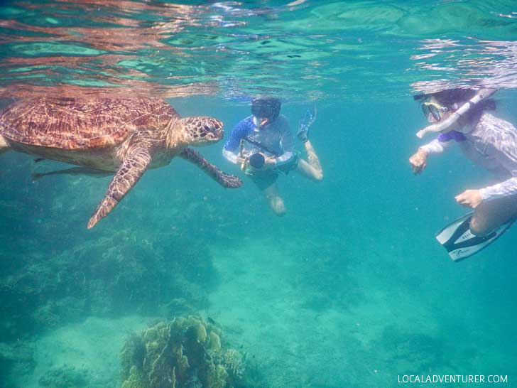 Swimming with Dozens of Endangered Sea Turtles in Indonesia // localadventurer.com