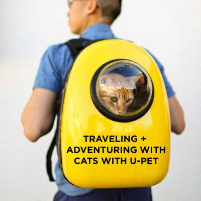 Adventuring and Traveling with Cats with U-Pet Carriers // localadventurer.com