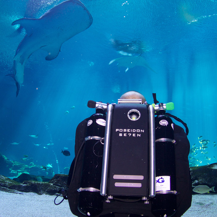 Rebreather Diving in the Georgia Aquarium - Journey with Gentle Giants Closed Circuit Rebreather Dive Program // localadventurer.com