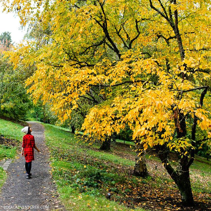 Hoyt Arboretum (25 Free Things to Do in Portland Oregon) // localadventurer.com