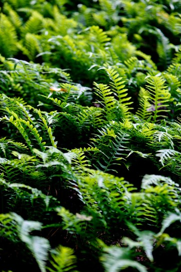 John B Yeon State Park Oregon // localadventurer.com
