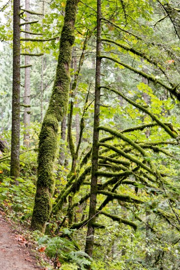 John Yeon State Park Oregon // localadventurer.com