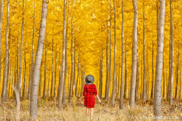 Boardman Tree Farm Fall Colors // Localadventurer.com
