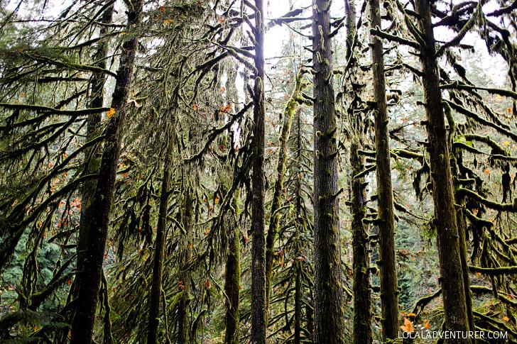Silver Falls State Park Oregon Hikes // localadventurer.com