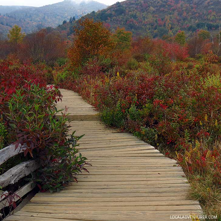 Graveyard Fields Loop - There are two waterfalls here in a valley surrounded by wildflowers. The fall colors are glorious with 360-degree views of 6,000-foot peaks. // localadventurer.com