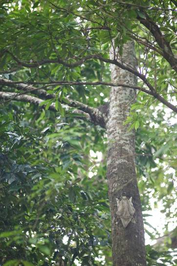 Keep your eyes out for flying lemurs at the Berjaya Langkawi Resort (9 Unique Things to Do in Langkawi Malaysia) // localadventurer.com