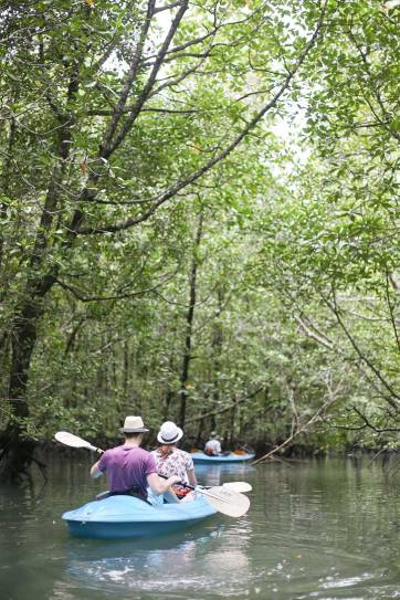 Kayaking through mangrove trees in Kilim Karst Geoforest Park. We learned so much about the plants and animals that inhabit the island // localadventurer.com