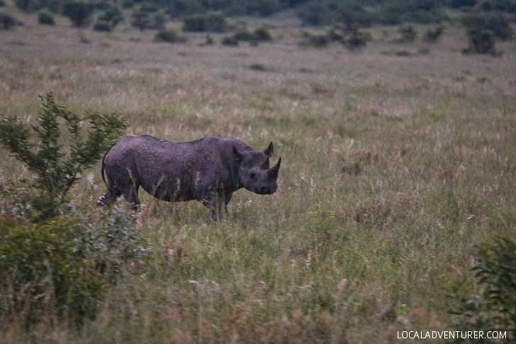 Pilanesburg Safari to see the Big Five - an Amazing Day Trip from Johannesburg South Africa // localadventurer.com