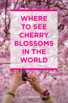 Where to See Cherry Blossoms in the World // localadventurer.com