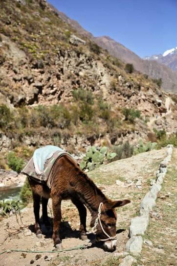 Hiking Peru - How to Hike the Inca Trail Day 1 // localadventurer.com