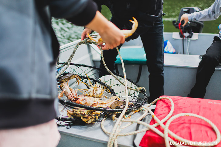 Dungeness Crab Season + Essential Tips for Crabbing in Oregon // localadventurer.com