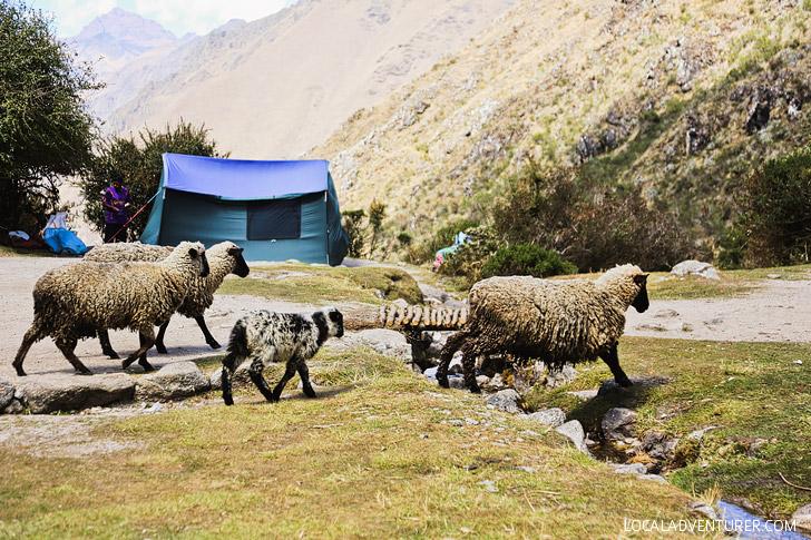 How to Hike the Inca Trail Peru Day 2 // localadventurer.com