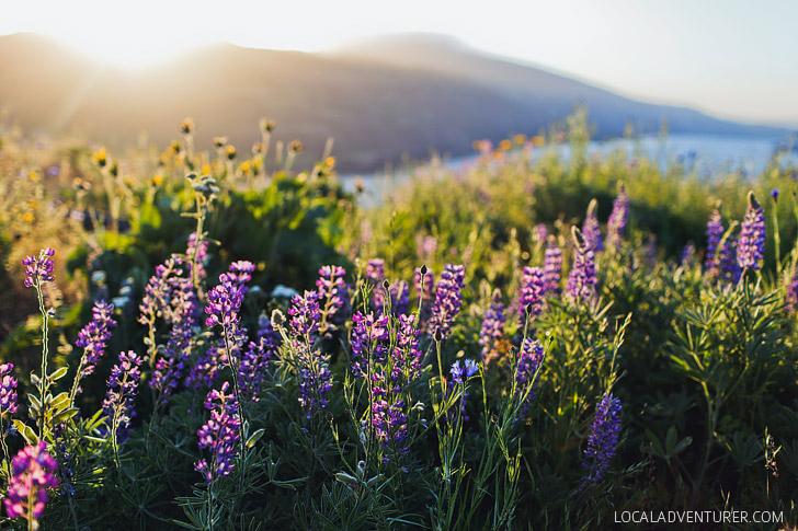 Rowena Plateau Hike + Best Wildflower Hikes in Oregon and Washington // localadventurer.com