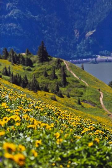 Best Wildflower Hike in the Gorge - Dog Mountain Trail // localadventurer.com