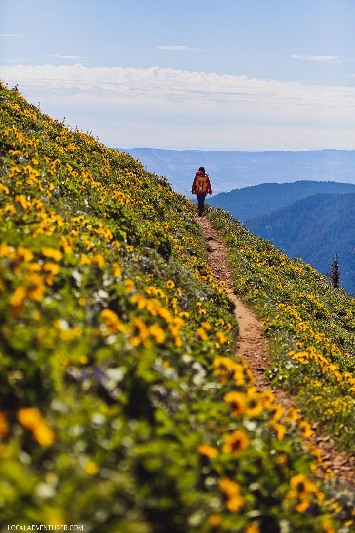 Dog Mountain, Columbia River Gorge Hikes, Washington // localadventurer.com