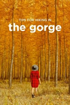 Columbia Gorge Hikes + Hiking to Waterfalls in Oregon // localadventurer.com