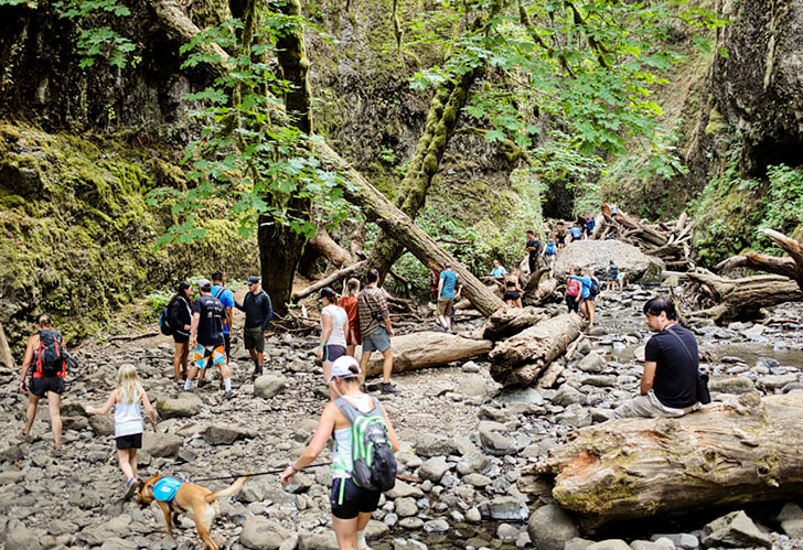 The Crowded Oneonta Gorge Trail to Lower Oneonta Falls // localadventurer.com
