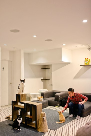 Koneko Cat Cafe + 25 Best Things to Do Indoors in NYC // localadventurer.com