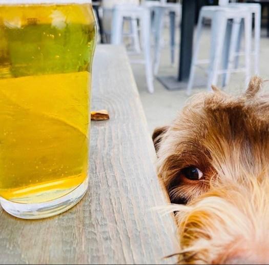 Photography Provided By: Laguna Beach Beer Company