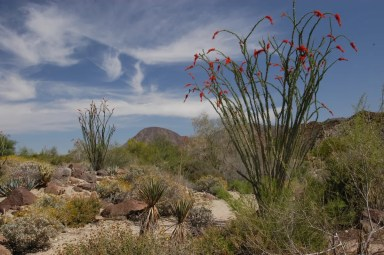 Gardens 1, The Living Desert