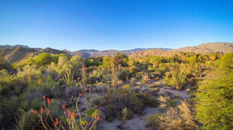 The Living Desert Aerial Photo