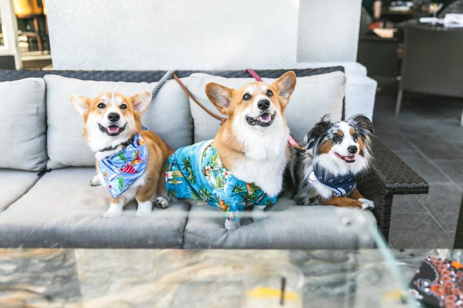 Balboa Bay Resort Dogs at A&O Kitchen+Bar