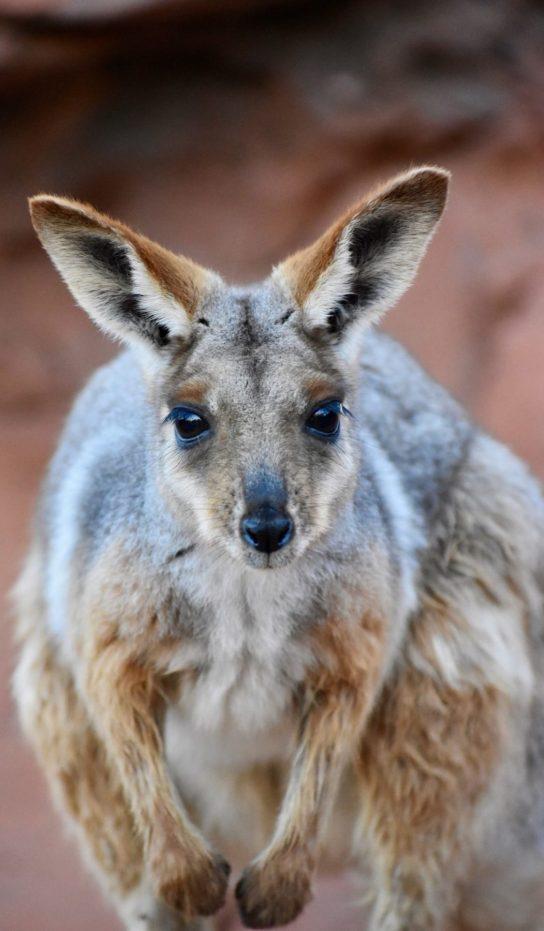 Australian Adventures Exhibit