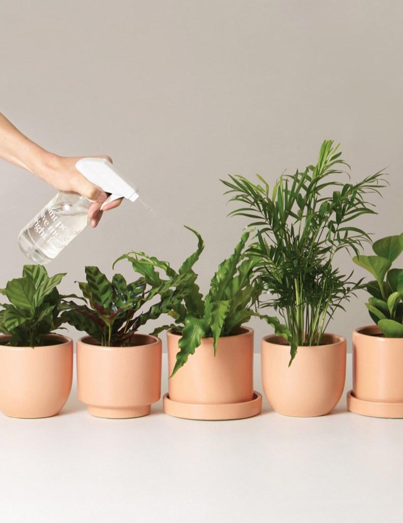 Plant Subscriptions LA
