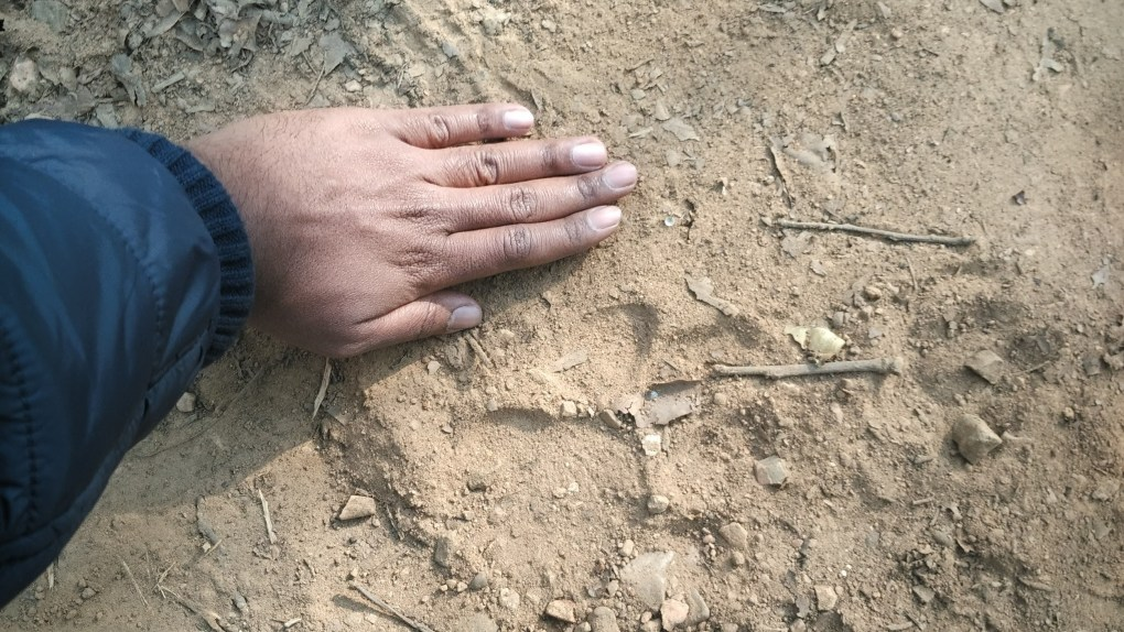 A1 feature image - pugmark hand Jim Corbett National Park article one