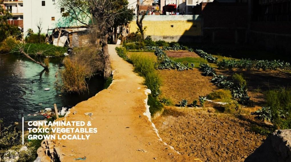 5 waste impact toxic veg