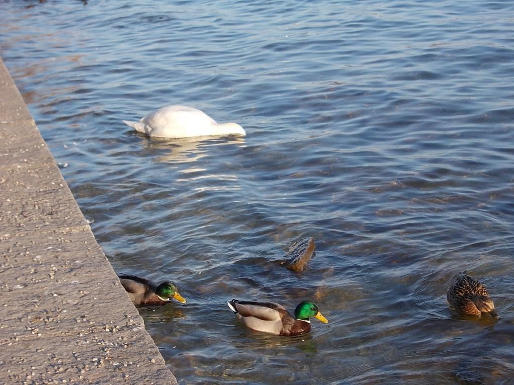 starnberg lake starnberger see munich