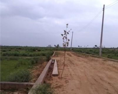 haldoni village land plot near bus stop