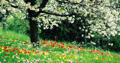 stunning spring plants
