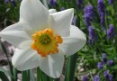 Plant fall bulbs for a brilliant display in spring time