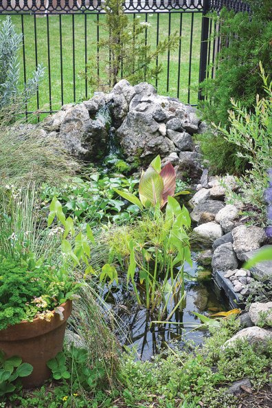 Many of the plants in this water garden are edible, including water hyacinth and arrowhead. Water in the garden is soothing and great for wildlife, especially birds, which help control pests.