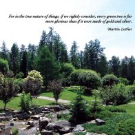 For in the true nature of things, if we rightly consider, every green tree is far more glorious that if it were made of gold and silver. ~Martin Luther